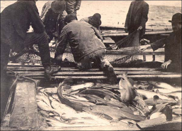 The Canadian government imposed a moratorium on the Northern cod fishery on 2 July 1992. The closure ended almost 500 years of fishing activity in Newfoundland and Labrador.