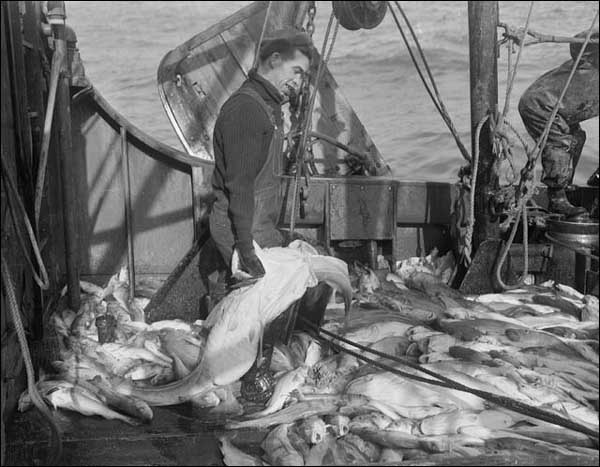Cod moratorium in newfoundland and labrador for History of fishing