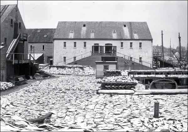 The salt-cod fishery was a mainstay of Newfoundland and Labrador's economy throughout the 1800s.
