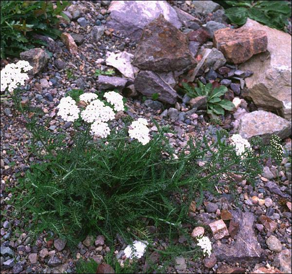 The province's many species of plants depend on water that is stored in the surface of the soil.