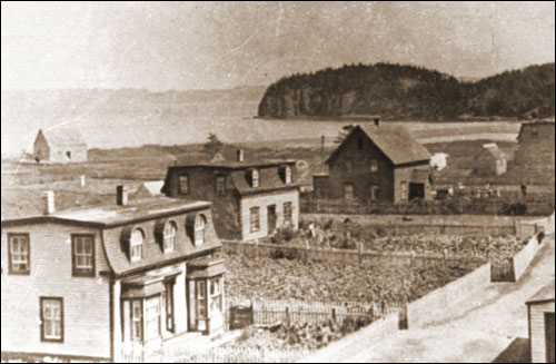 View of Haystack, Placentia Bay, circa 1915, showing potato plants covering the gardens around most homes. This crop was an essential part of the diet of many Newfoundland outport fishing families for most of the 19th and 20th centuries.