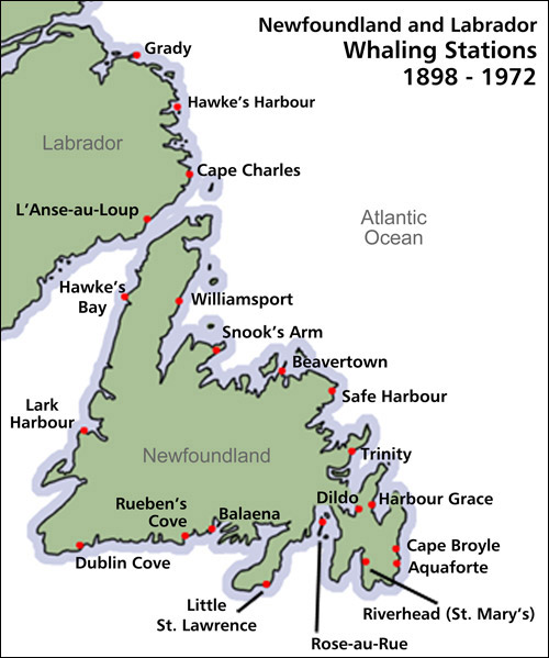20th Century Commercial Whaling in Newfoundland and Labrador