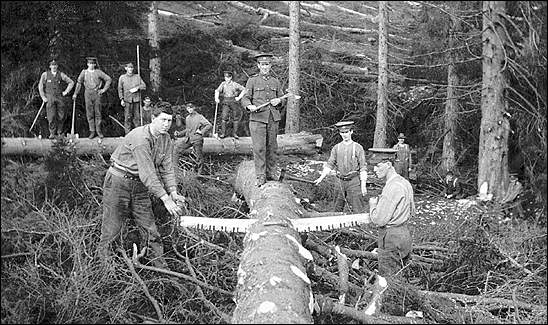 Newfoundland Forestry Corps